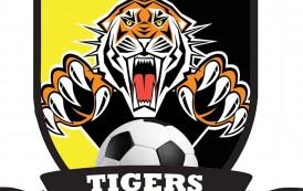 Ecco le Futsal Tigers, C1 con il titolo della Magna Graecia: Delli Bovi presidente, Procida in panchina